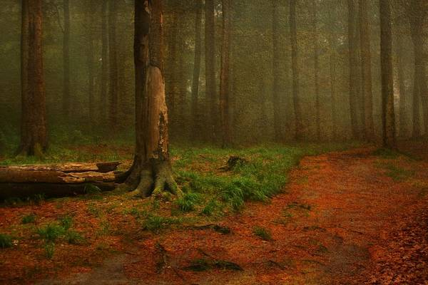 Wellness Mixed Media - fairytale Forest 1 by Heike Hultsch