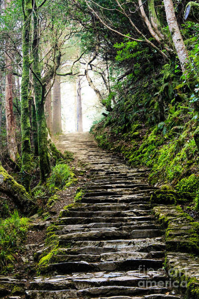 Irish Landscape Photograph - Fairytale Stairs by Amy Sorvillo
