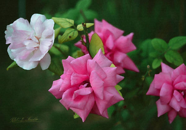 Photograph - Fake Painting Of Roses by Robert Kernodle