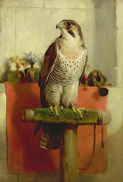 Painting - Falcon by Edwin Henry Landseer