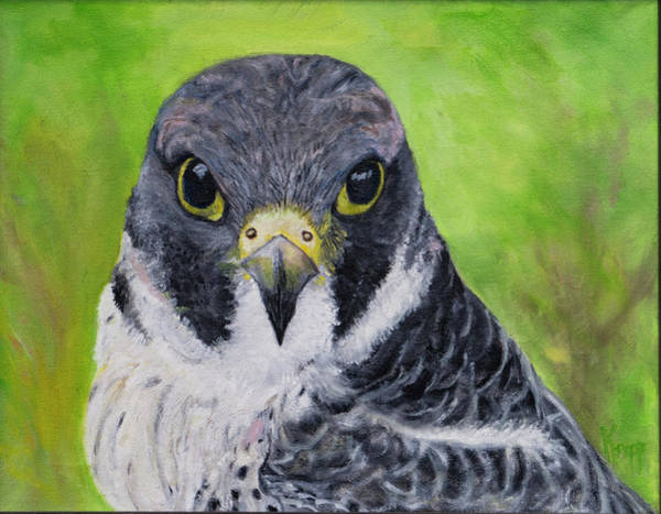 Painting - Falcon by Kathy Knopp