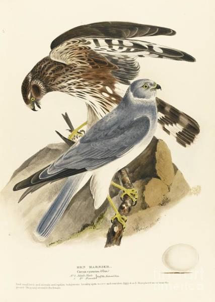 Meyer Painting - Falcons by MotionAge Designs