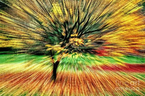Photograph - Fall Abstract by Martyn Arnold