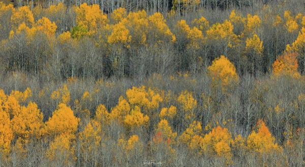 Photograph - Fall Abstract by Rick Furmanek