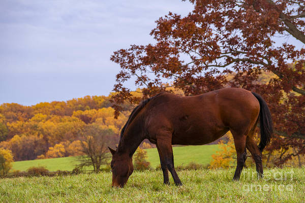 Photograph - Fall And A Horse by Rima Biswas
