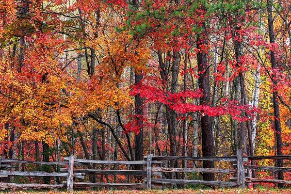 Photograph - Fall And The Wood Fence by Carol Montoya