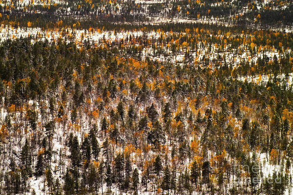Photograph - Fall And Winter On The Same Day by Heiko Koehrer-Wagner