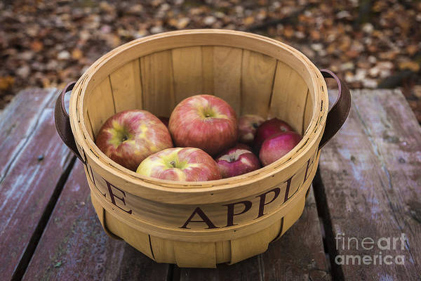 Photograph - Fall Apple Basket by Alissa Beth Photography