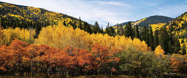 Wall Art - Photograph - Fall Aspen Scrub Oak And Ponderosa Pine by Dan Norris