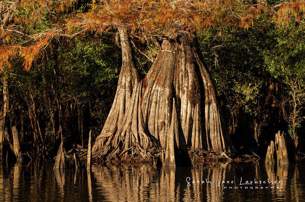 Wall Art - Photograph - Fall At Dead Lakes by Sarah-jane Laubscher