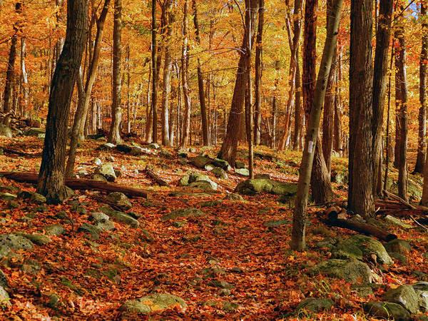 Photograph - Fall At In Ny by Raymond Salani III