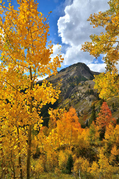 Photograph - Fall At Ohio Pass by Ray Mathis