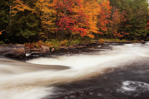 Photograph - Fall At Oxtongue Rapids by Peter Pauer
