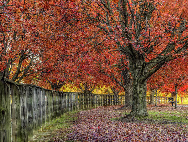 Photograph - Fall At Riverview Park Two by Jerry Gammon