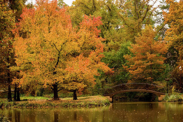 Fall At The Arboretum Art Print