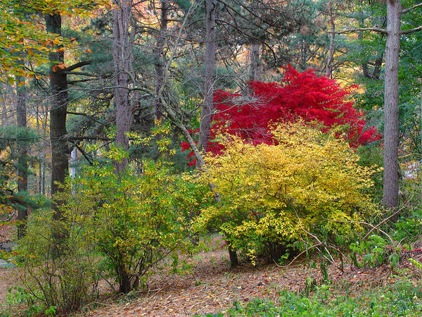 Photograph - Fall At The Arboretum by Juergen Roth