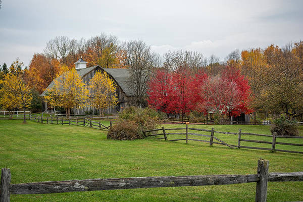 Photograph - Fall At The Farm by Guy Whiteley