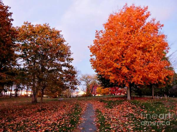 Photograph - Fall Beauty by Marcia Lee Jones