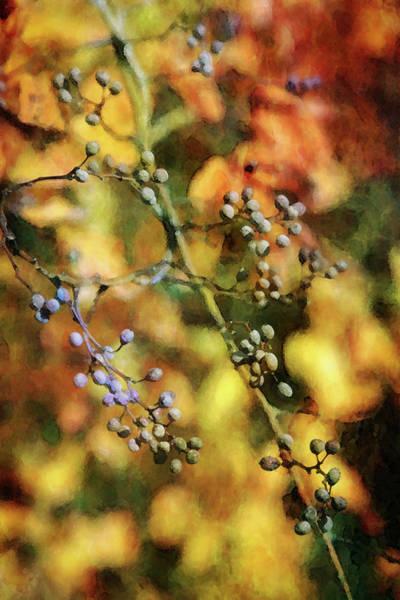 Photograph - Fall Berries 7183 Dp_2 by Steven Ward