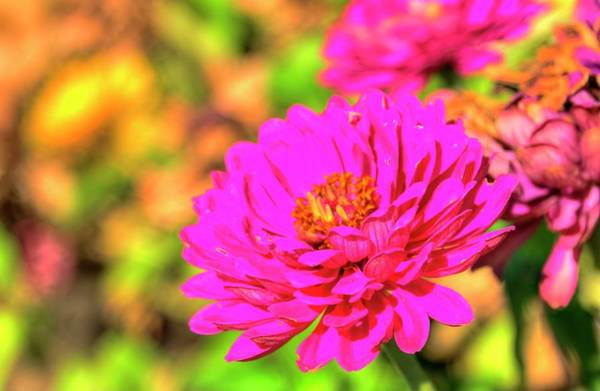 Photograph - Fall Blossom Detail by Jerry Sodorff