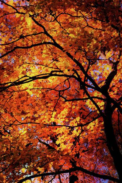 Photograph - Fall Canopy 7113 Dp_2 by Steven Ward