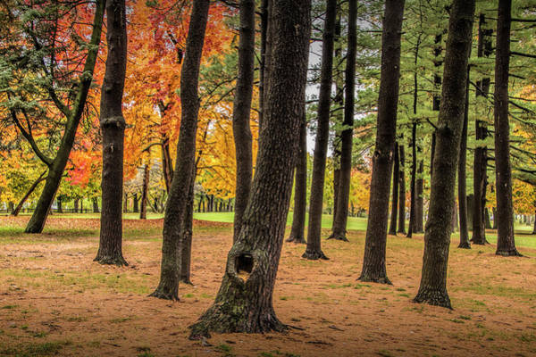 Photograph - Fall City Park Scene In With Pine And Maple Trees by Randall Nyhof