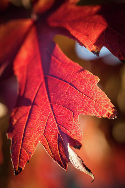 Photograph - Fall Color 5528 11 by M K Miller