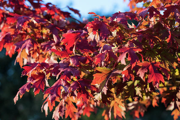 Photograph - Fall Color 5528 14 by M K Miller