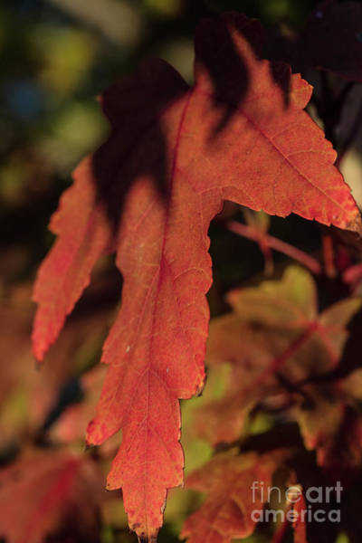 Photograph - Fall Color 5528 16 by M K Miller