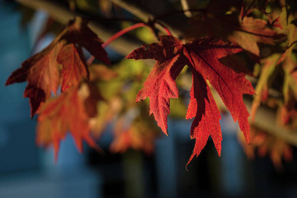 Photograph - Fall Color 5528 18 by M K Miller