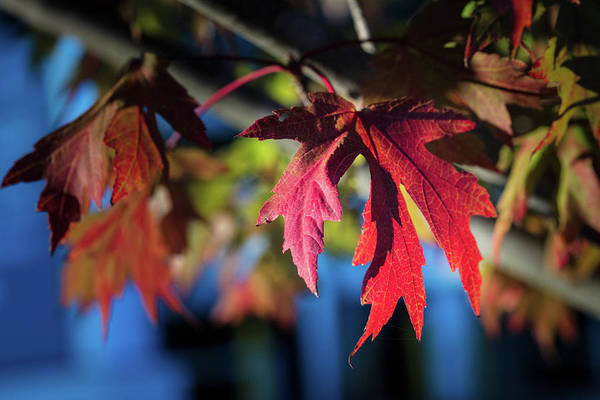Photograph - Fall Color 5528 19 by M K Miller