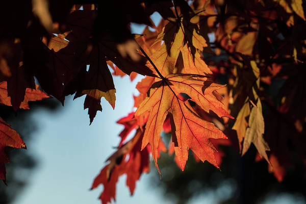 Photograph - Fall Color 5528 20 by M K Miller