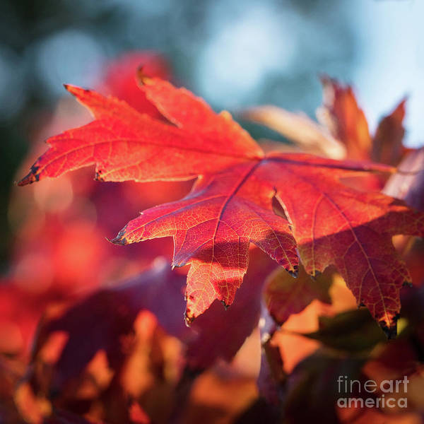 Photograph - Fall Color 5528 25 by M K Miller