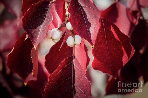 Photograph - Fall Color 5528 28 by M K Miller