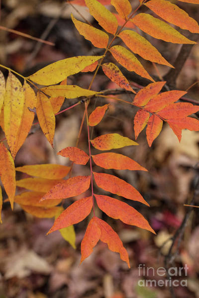 Photograph - Fall Color 5528 29 by M K Miller