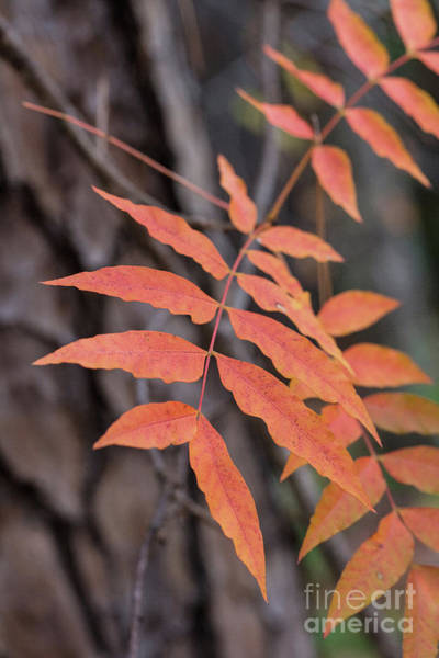 Photograph - Fall Color 5528 33 by M K Miller