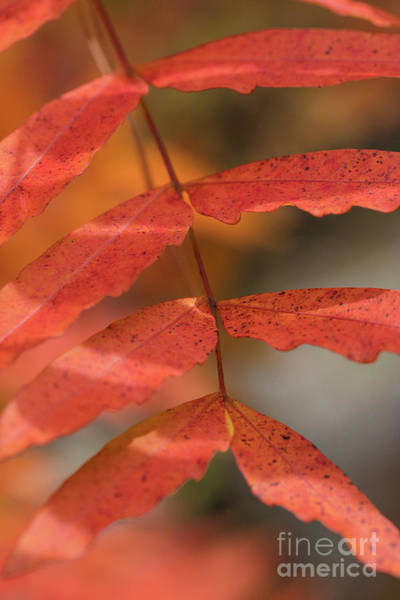 Photograph - Fall Color 5528 34 by M K Miller