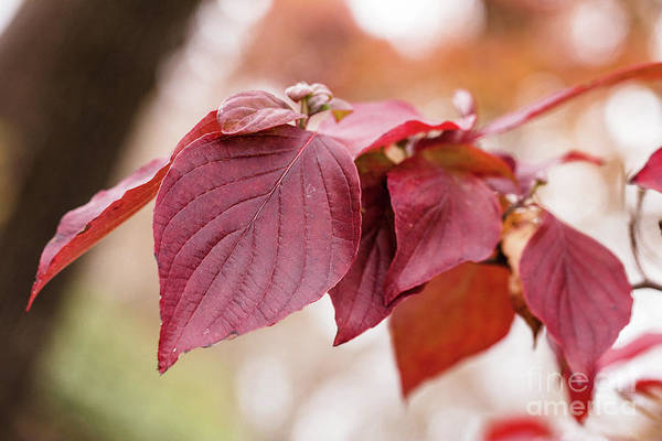 Photograph - Fall Color 5528 51 by M K Miller