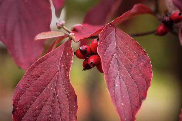 Photograph - Fall Color 5528 53 by M K Miller