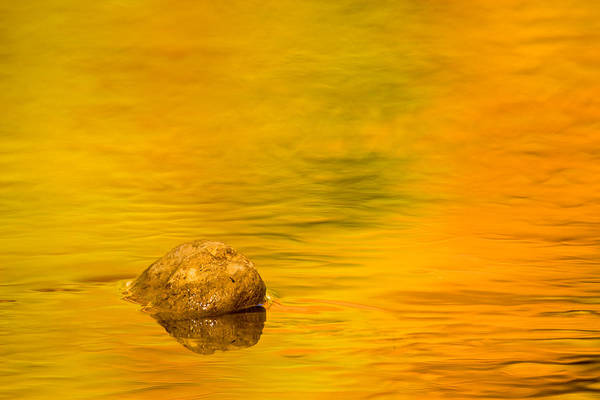 Photograph - Fall Color Abstract by Adam Romanowicz