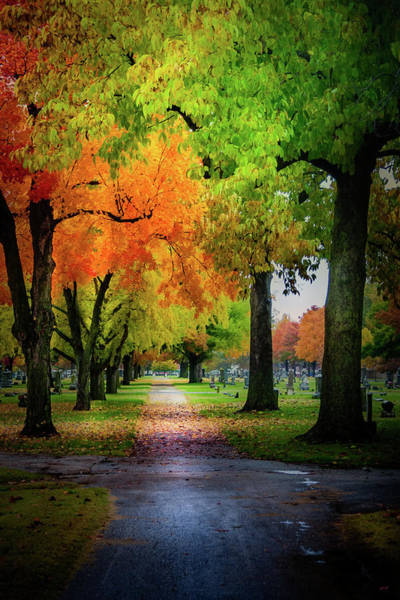 Photograph - Fall Color by Allin Sorenson