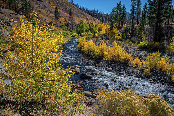 Photograph - Fall Color Along The Carson River by Lynn Bauer