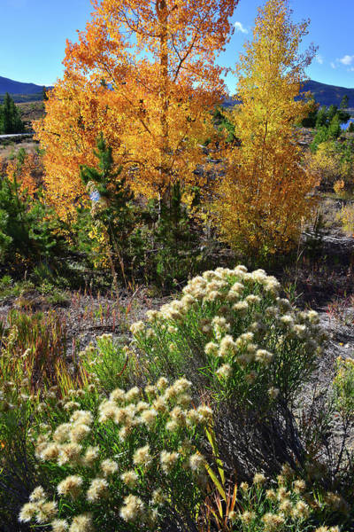 Photograph - Fall Color Comes To Dillon Reservoir by Ray Mathis