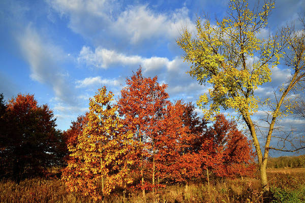 Photograph - Fall Color Comes To Oak Trees Along Route 31 by Ray Mathis