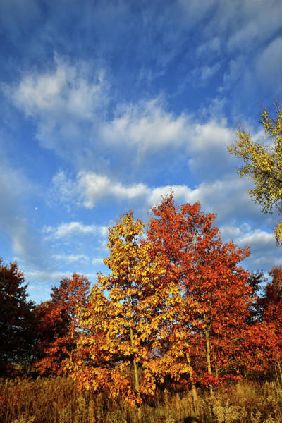 Photograph - Fall Color In Glacial Park In Mchenry County by Ray Mathis