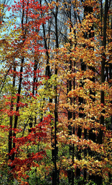 Photograph - Fall Color In Rib Mountain State Park by Ray Mathis