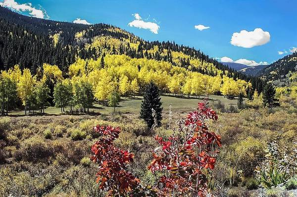 Photograph - Fall Color In The Colorado Foothills by NaturesPix