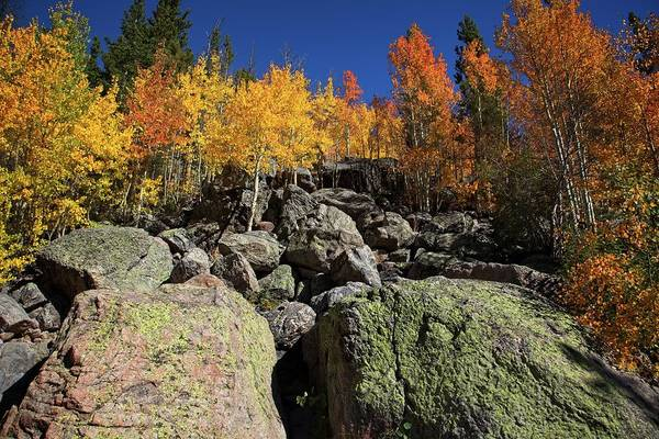 Photograph - Fall Color In The Rocky Mountains by Ronald Lutz