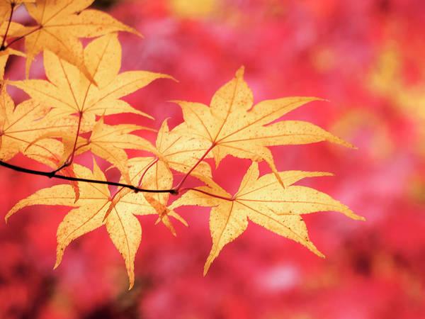 Photograph - Fall Color by Kyle Wasielewski