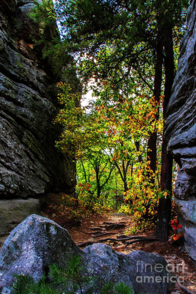 Photograph - Fall Color Lights Up The Trail by Barbara Bowen